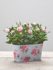 Pretty Rose Tin